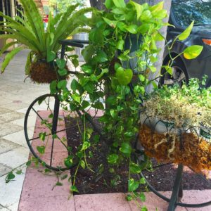 officially the cutest planter ever! spied this two wheeler inhellip